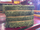 Organic hay for animal feed Alfalfa and Lucerne
