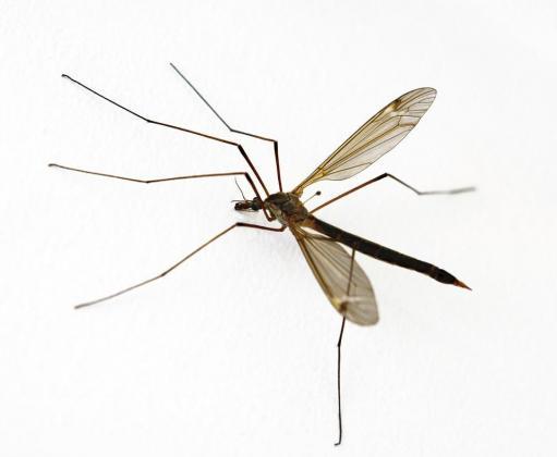 Slate Pest Control
