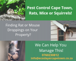 Eco Slayer Cape Town - Pest, Bird, Pathogen & Odour Control Experts