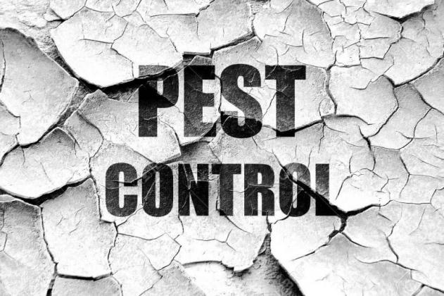 Value Pest Control - Affordable Pest Control Services in Johannesburg