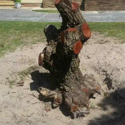 KNOWLE TREE SERVICES-Stumps uprooting in walmer/Port Elizabeth in Port Elizabeth, Eastern Cape