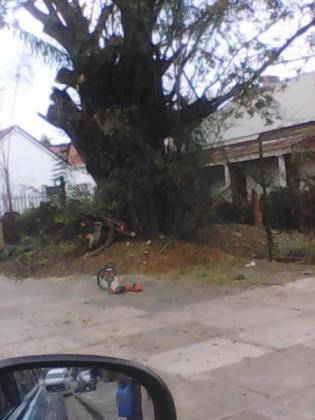 TREE FELLING ,REMOVAL SHAPPING,TRIMMING STUMP REMOVAL