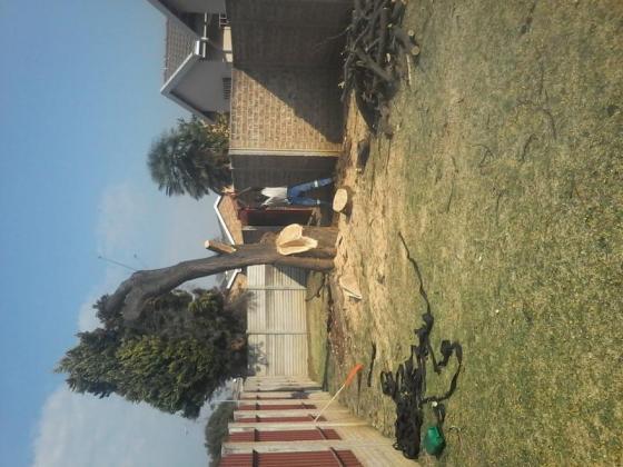 TnS TREE FELLING 0767952337