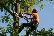 Roodepoort Tree felling Services 0734421108