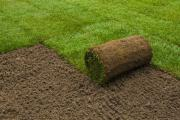 Roll On Lawn Cape Town: Instant Grass (Kitsgras) + Top Dressing