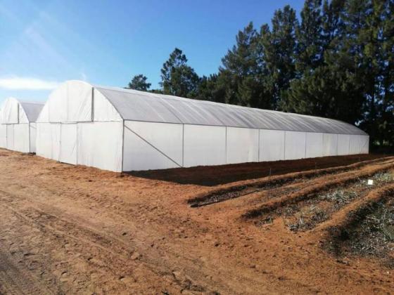 We sale and repair Tunnels Greenhouses in Pretoria, Gauteng