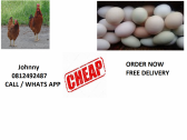 Johnny's fresh chicken eggs for sale to you the public