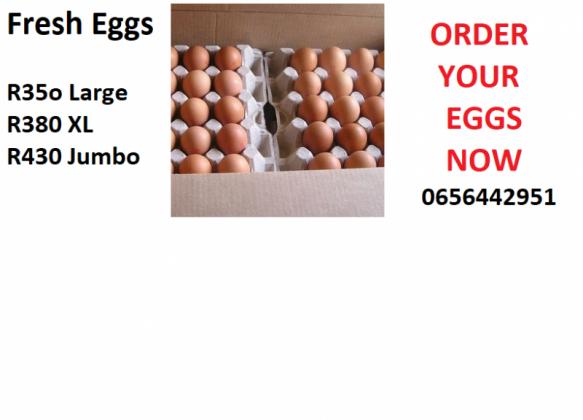 Bulk egg sales and distributors for Gauteng - Pretoria