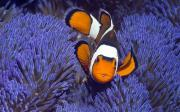 marine fish and corals for sale