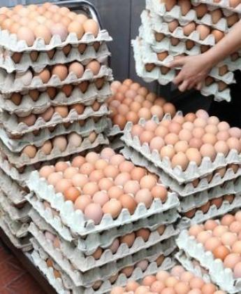 FARM FRESH EGGS WHOLESALE PRICE . CALL/WHATSAPP 0710414773