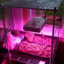 165W Full Spectrum LED Grow Light Hot Sale South Africa