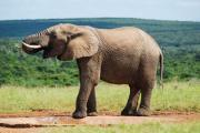 Addo Safaris Eastern Cape