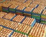 Stock Available now for sale Fresh Brown and White Chicken Eggs.