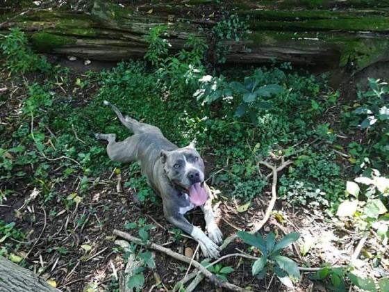 Blue, imported, 3 years old, vaccinated and vet checked, Durban