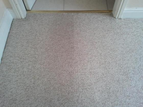 carpet cleaning at low cost