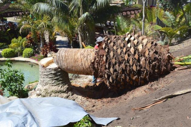 Tree Felling Services | Budget Tree Fellers