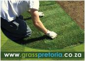 Kikuyu & LM Grass Supplier