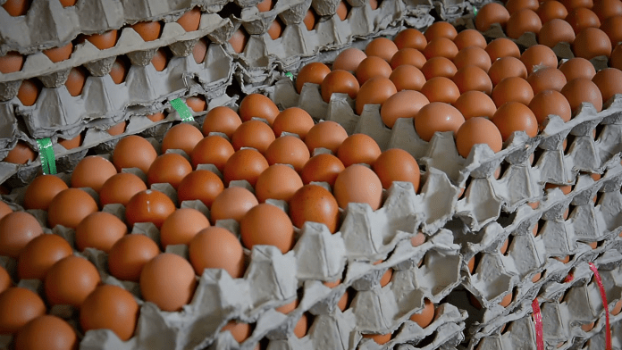Fresh Chickens And Eggs Available For Bulk Sale