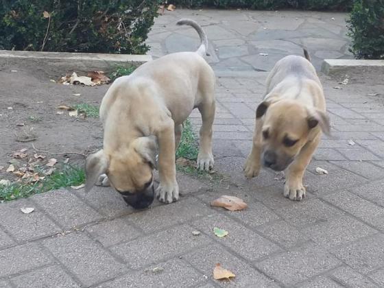 2 Female puppies in Piketberg, Western Cape