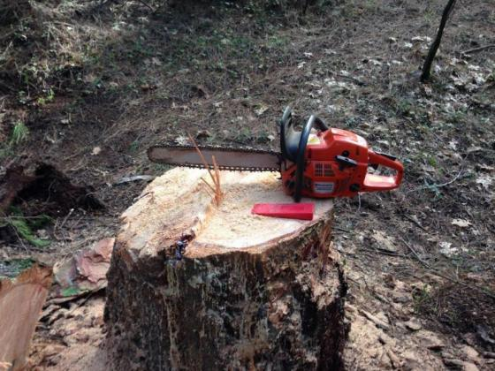 Any Chainsaw Work Port Elizabeth
