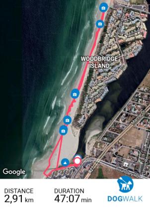 Dog walking with Bismark's Bistro in Cape Town, Western Cape