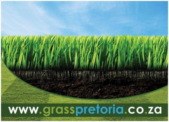 Grass Pretoria