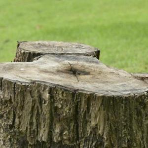 Stump Removing Port Elizabeth