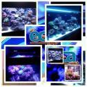 eca - professional aquariums & services