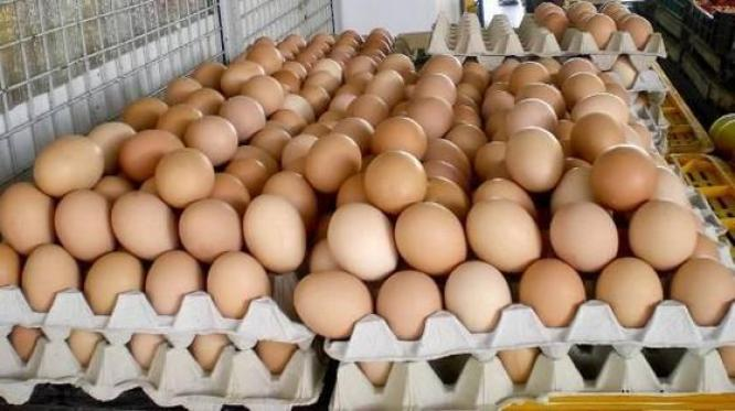 Fresh brown and white chicken table eggs for sale in Queenstown, Eastern Cape