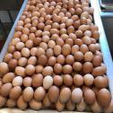 Fresh brown and white chicken table eggs for sale