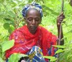 Mama Rose African Herbalist