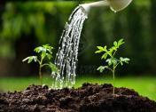 Quality Organic Compost