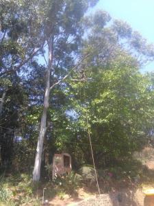 We specialize in Tree Felling