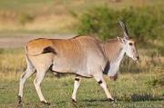Hunting Safaris South Africa