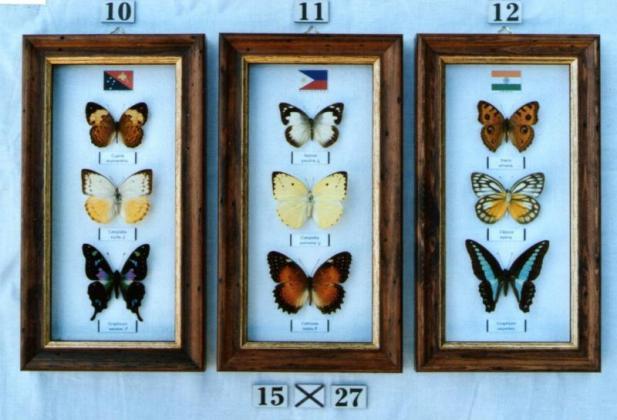Real framed butterflies in Pretoria North, Gauteng