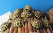 Beautiful Tortoises in tip top health for sale.