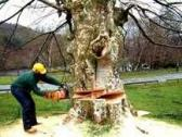 Tree Felling, Grass Cutting and Gardening Services