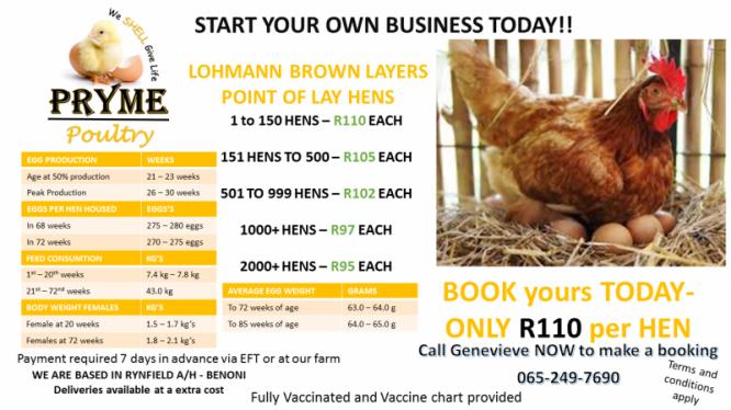 Point of Lay Hens in Benoni, Gauteng