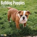 adorable bulldog puppies for sale