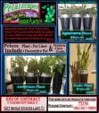Indoor Pots and Plans  - End of contract sale