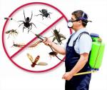 Pest Control Services in Sandton