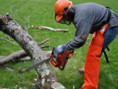 Tree Felling Port Elizabeth | Garden Wise