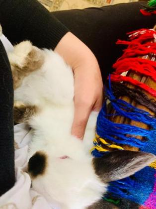 Beautiful bunnies / rabbits