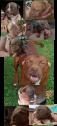 Rednose Pitbull puppys