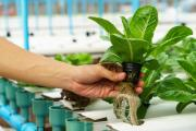 Best Hydroponic Accessories in South Africa