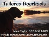 PEDIGREE BOERBOEL PUPPIES FOR SALE
