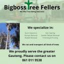 Bigboss tree felling & house cleaning service