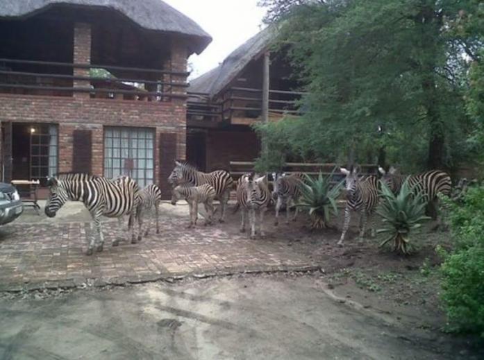 Induku Lodge Holiday in Marloth Park, Mpumalanga