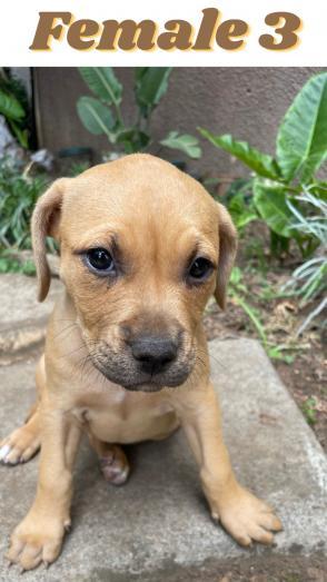 Pups for sale in Pretoria East, Gauteng